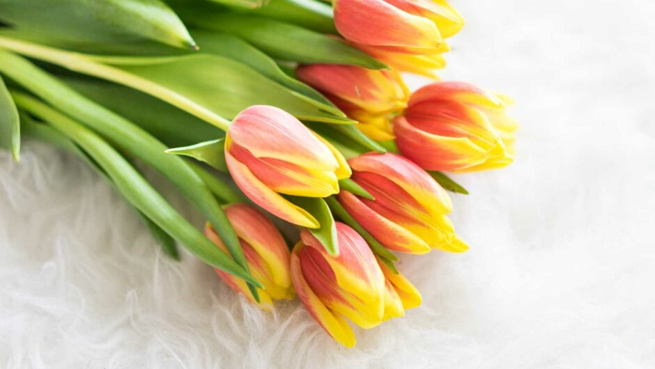 Bouquet of Kees Nelis Tulips on Synthetic Pelt